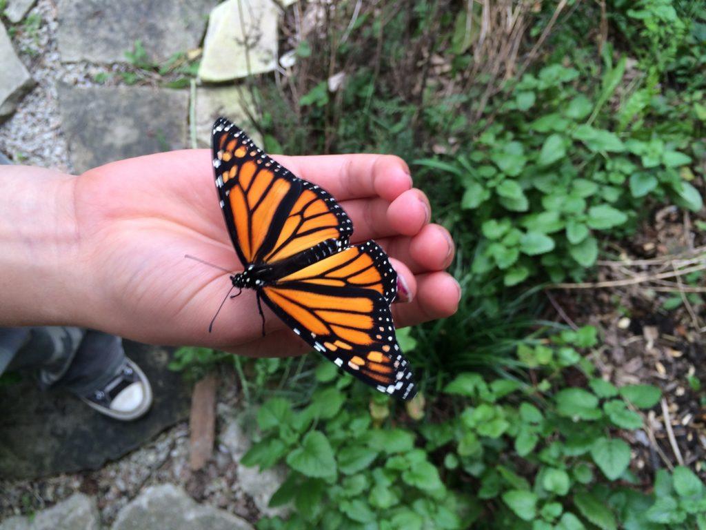 monarch on child hand